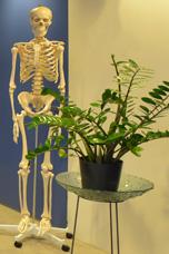 skelett-342